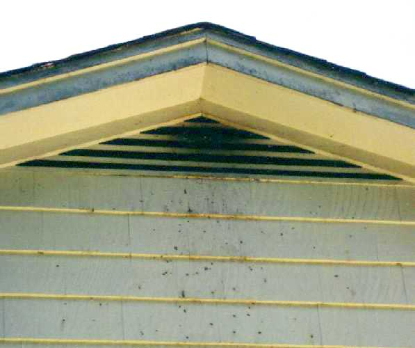 Smudges and rub marks on house indicating bat inhabitance